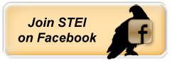 Join STEI on Facebook
